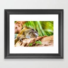 Chameleons master of disguise Framed Art Print