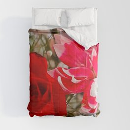 Dianthus and the Rose Comforters