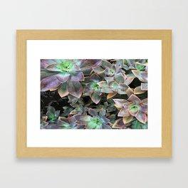 Green and lavender succulents Framed Art Print