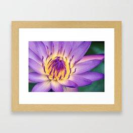 Ao Lani Heavenly Light Framed Art Print