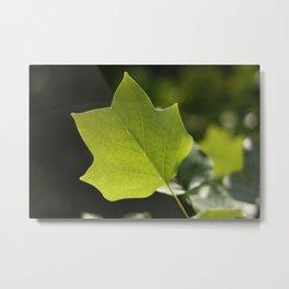Lovely Leaf Metal Print