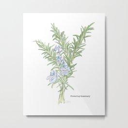 Flowering Rosemary Metal Print