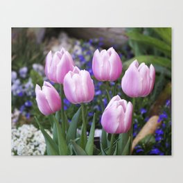 Spring gathering of pink tulips Canvas Print
