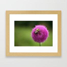 Bumble Bee on Purple Thistle Framed Art Print
