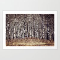 birch Art Prints featuring birch by Leanne Taylor Collection