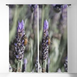 Lavender with Bee Blackout Curtain
