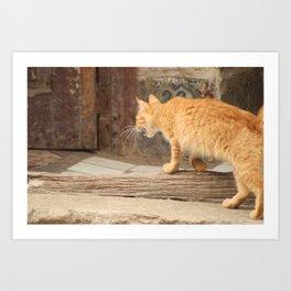 Cuban Street Cat Tiger Art Print