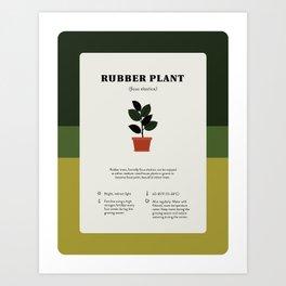 Rubber Plant Care Art Print