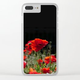 Red Poppies in bright sunlight Clear iPhone Case