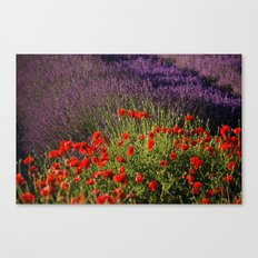 Lavender and Poppies, Hood River Valley Canvas Print