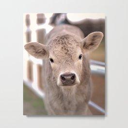 Spring Calf Metal Print