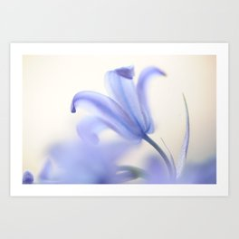 Blue Light. The Wild Hyacinth Art Print