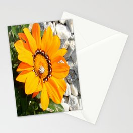 Bright Orange Gazania Flower with Snail Stationery Cards