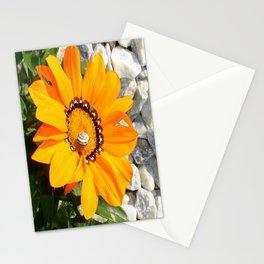 Bright Orange Gazania Flower with Snail Stationery Cards