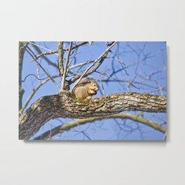 Squirrel in Nature Metal Print