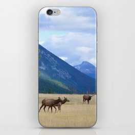 Bull Elk with his Harem iPhone Skin