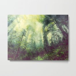 forest, mist, nature Metal Print