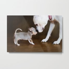 The Chihuahua vs The Pity Metal Print