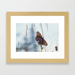 Mountain Butterfly Framed Art Print