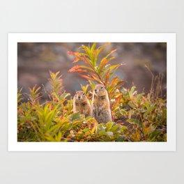 Sweet couple of Arctic ground squirrels in Autumn Art Print