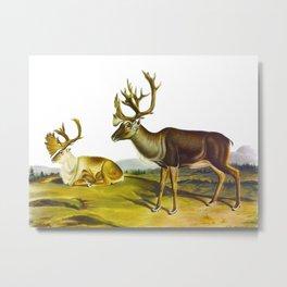 Caribou, or American Reindeer Metal Print