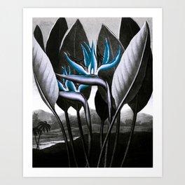 Birds of Paradise Temple of Flora Blue Gray Art Print