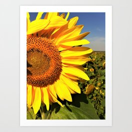 Sunflower fields forever Art Print