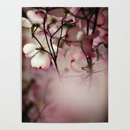 Under the Dogwood Tree Poster