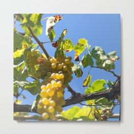 Summer wine Metal Print
