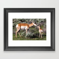 Pronghorn Mother and Baby Framed Art Print