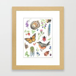 Flora and Fauna of Summer Framed Art Print