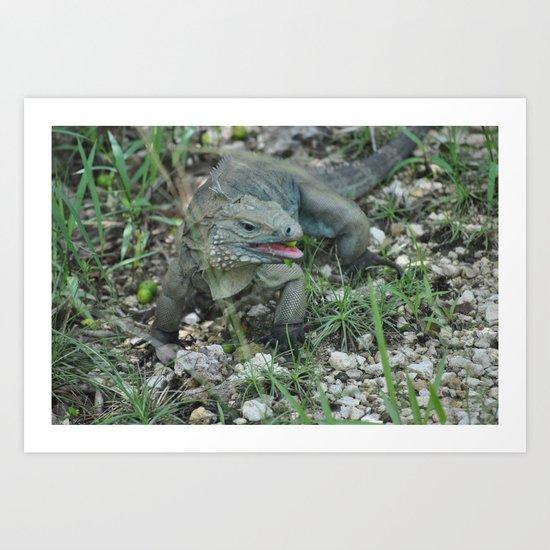 Cayman Iguana Art Print