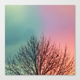 Same Tree Different Day Canvas Print