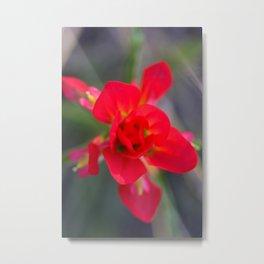 Springtime Paintbrush Wildflower Metal Print