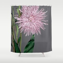 pale pink aster botanical Shower Curtain