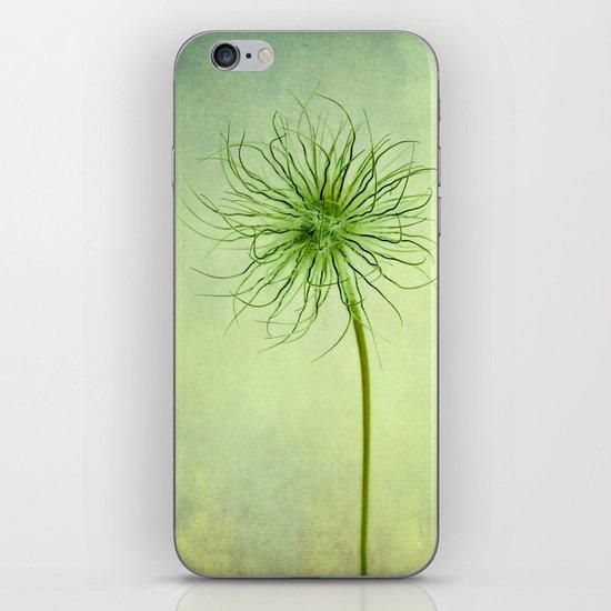 pulsatilla seed head iPhone & iPod Skin