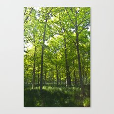 Peaceful Forest Canvas Print