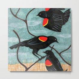 Red Winged Blackbirds in Marsh Metal Print