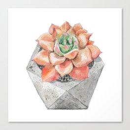 Orange Succulent with Concrete Planter Canvas Print