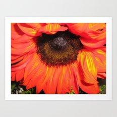 Blaze of Color Art Print