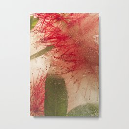 Weeping Bottlebrush Tree #42 Metal Print