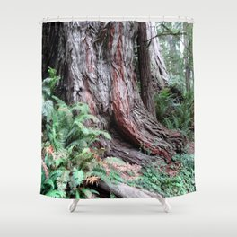 Giant Redwoods Rainforest 06 Shower Curtain
