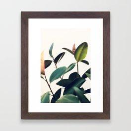 Ficus Elastica #8 Framed Art Print