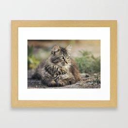 Cat Lying Down Framed Art Print