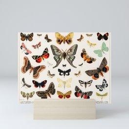 Butterfly Butteflies Mariposa Mariposas Papillon Papillons - Vintage Book Illustration Mini Art Print