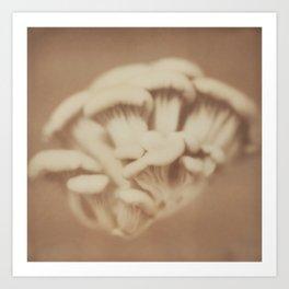 Funghi Art Print