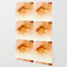 camellia II Wallpaper