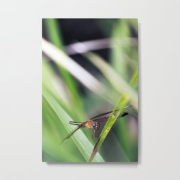 Dragonfly Resting on Grass Metal Print