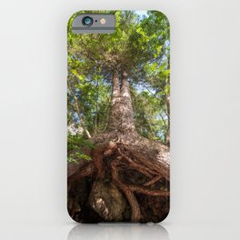 Bottom view of a large tree and its huge roots that come out of the ground iPhone Case