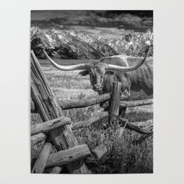Texas Longhorn Steer by an Old Wooden Fence in Black and White Poster